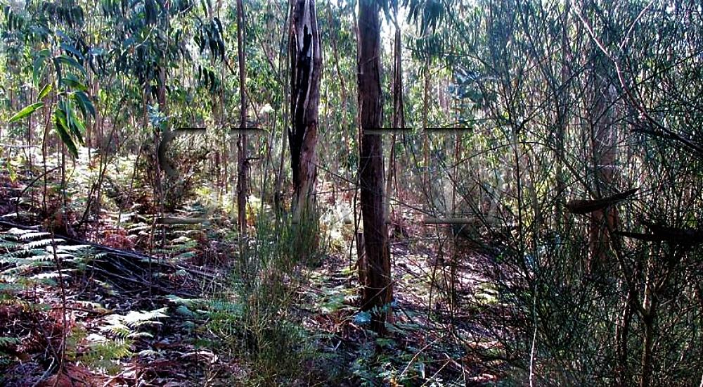 terreno-florestal-1