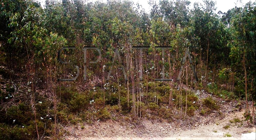 terreno-florestal-2
