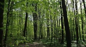 0703112, Terreno Florestal em Tibães